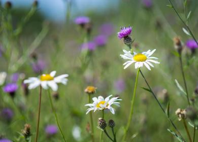 nature trail wildflower meadow 5 star caravan holiday park Herefordshire
